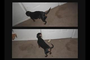 Dog Eat Dog1