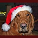 SAMY CHRISTMAS