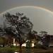 Rainbow by LAFD