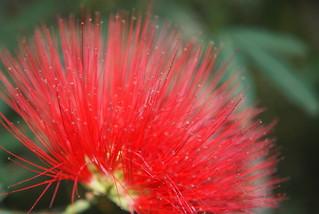 صورة Botanical Garden قرب بورتو أليغري. macro flora botanicalgarden