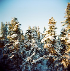 The Holga Forest