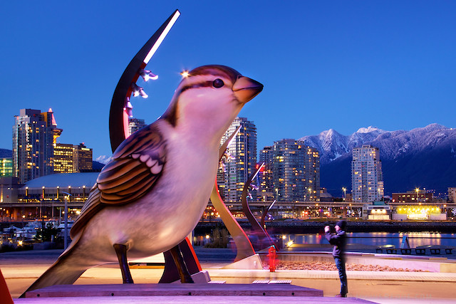 Tonight in Vancouver: What Do Hungry Giant Sparrows Eat?