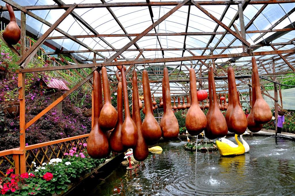 Garden in Rose Valley, Cameron Highlands ...