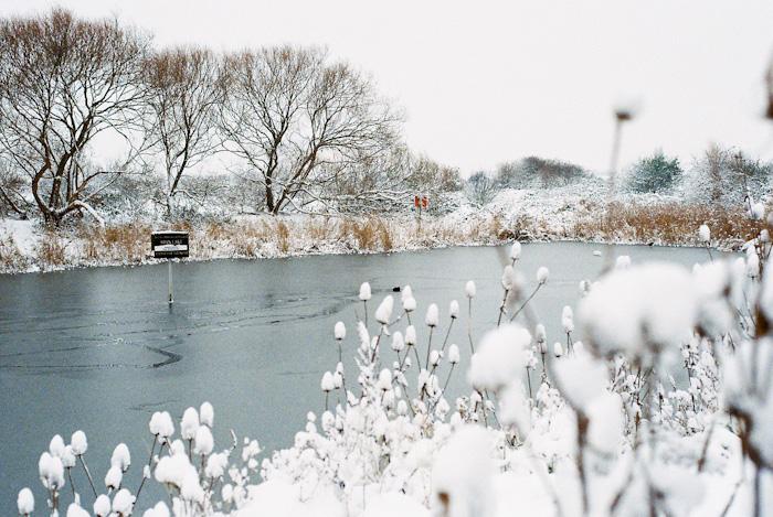 Swan Lake Ice