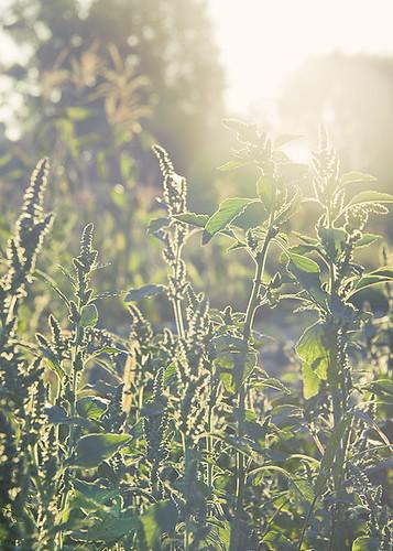 summer plants sunshine canon kotelva