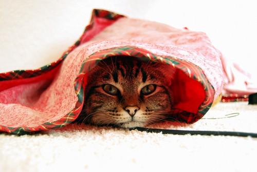 Christmas ninja kitteh