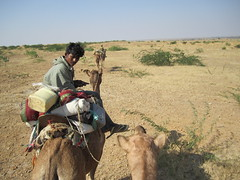 texting on a camel