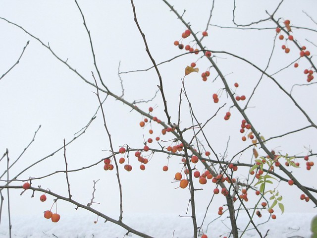 winter berries - more wintry inspiration | Emma Lamb
