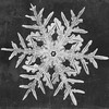 Snowflake Study by Smithsonian Institution