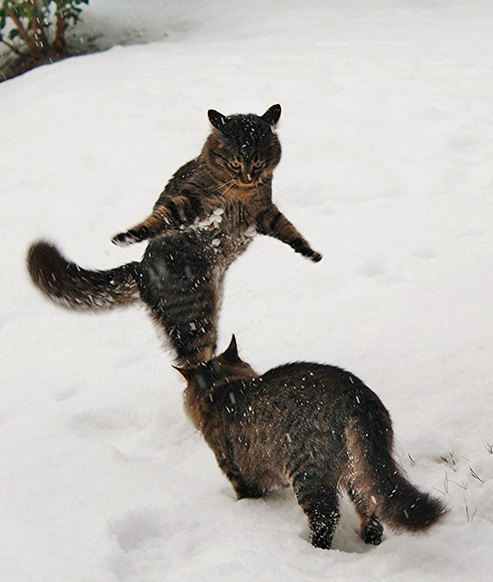 Puki and Lusy play on the snow