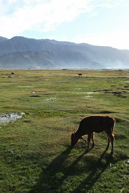 タシュクルガン、湿地帯の朝