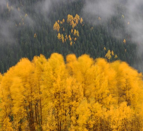 autumn trees mountains tree fall nature landscape landscapes colorado wind wilderness aspen sanjuanmountains aspentrees southsanjuans