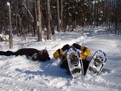 snowshoe, winter sport, winter, snow,