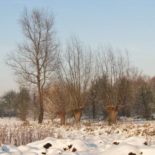 schnee winter snow tree landscape belgium belgique sneeuw belgië natuur boom explore neige bel arbre baum aaa landschap flanders belgien bélgica vlaanderen flandern lede belgia flandre flandes ベルギー explored flemishregion canons5 flhregion