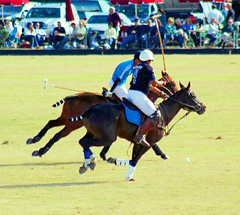 Sunday Polo at Lakewood Ranch --Sarasota, Fla. Chasing the ball