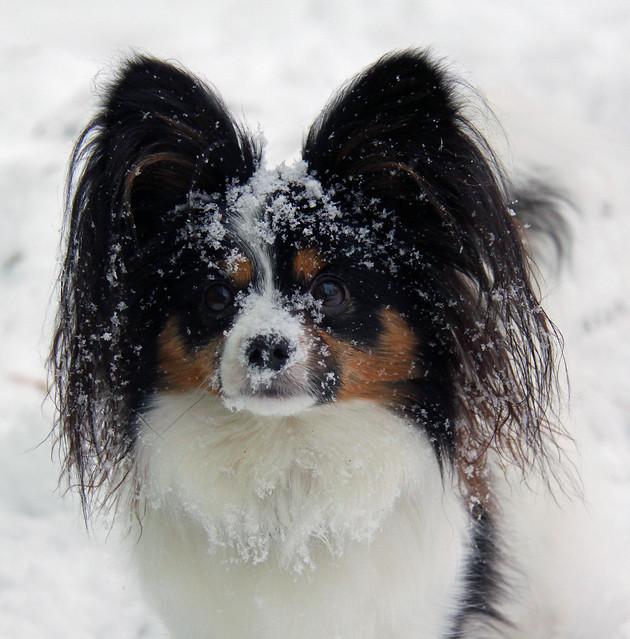 Hey Mom..I think its snowing