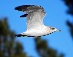Sunset Park - Sea Gull