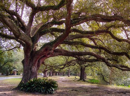 park new landscape nikon orleans louisiana hdr audubon d40
