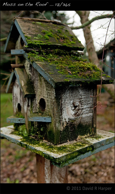 Moss On The Roof 17 365 Flickr Photo Sharing