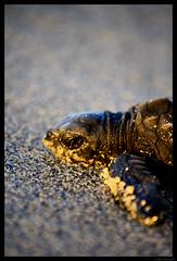 Turtles and Tortoise