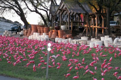 Pots Plants Garden Center Austin Flamingos Flickr Photo Sharing