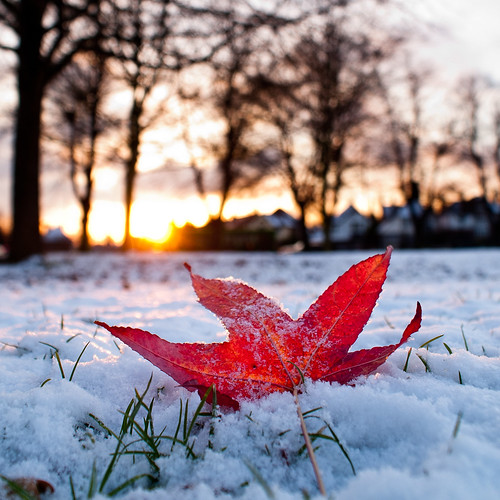 Autumn in Winter