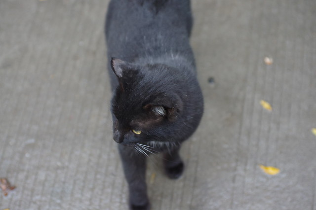 Jimmy小区里的黑猫