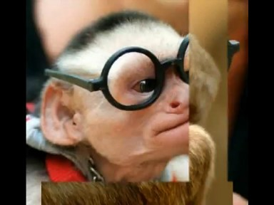 Youtube Wally Warning Monkey Funny Edition