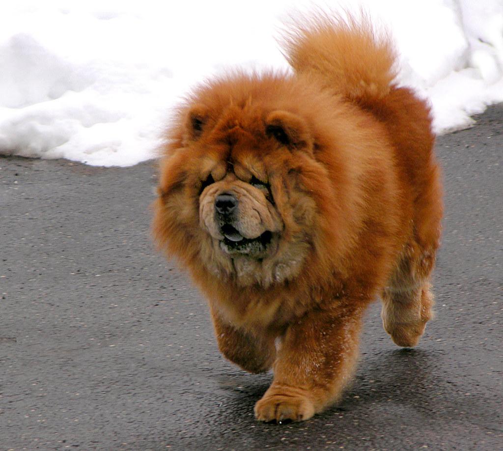 Фото собак с надписями  Смехотища