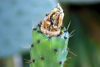 صورة Botanical Garden قرب بورتو أليغري. cactus macro flora botanicalgarden