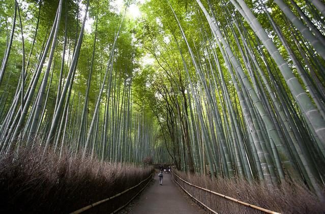 Bamboo Forest, Arashiyama Sagano Kyoto