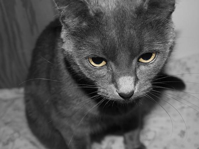 Header of Cat's Eyes