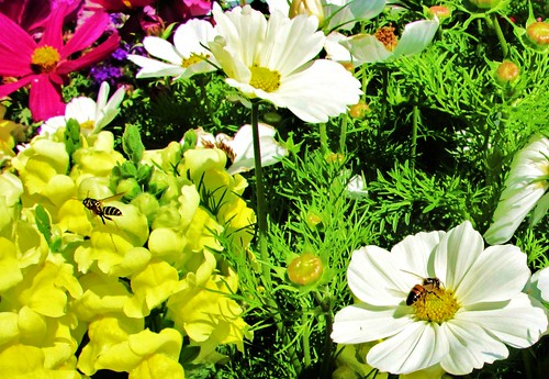 Busy in the Flower Garden