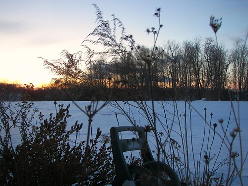 morning winter snow silhouette backyard dusk westernnewyork penfield sunse