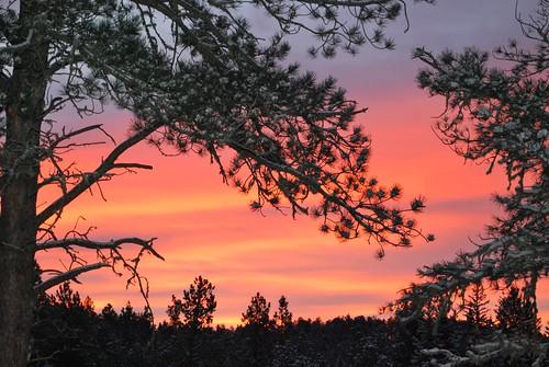 morning november blue trees red snow blackhills forest sunrise gold nikon purple sd evergreens