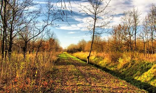 autumn church forest hungary templom magyarország ősz erdő békéscsaba