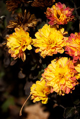 Photograph: Flowers in December