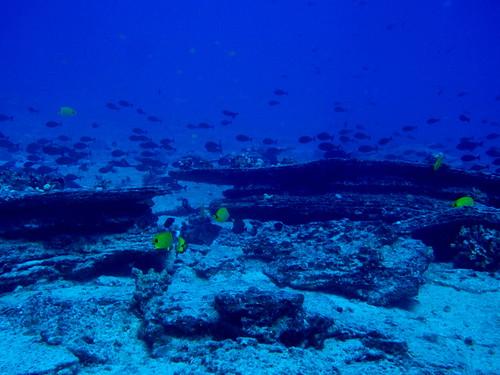 Подводное фото