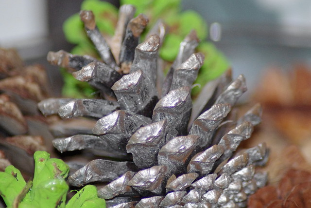Image Result For Pine Cone Color
