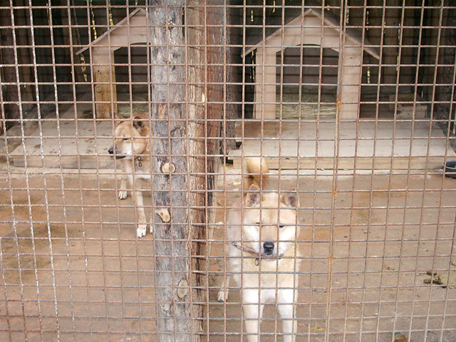 Uk Law Breeding Dogs How Many Bitches Can U Keep