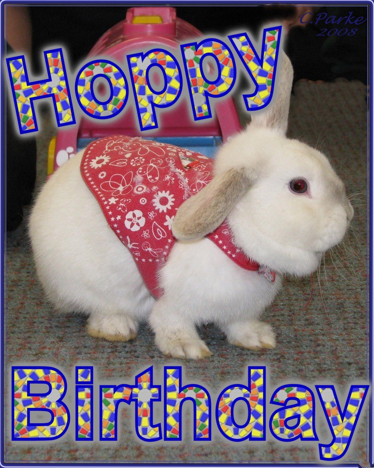 hoppy birthday eCard: Birthday: Rabbit   hoppy birthday | You can use this … | Flickr hoppy birthday