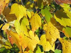 Autumn colors Walnut Creek Lake Raleigh NC 0512