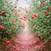 Lối hoa by HaN2T