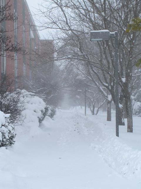 Winter Storm!