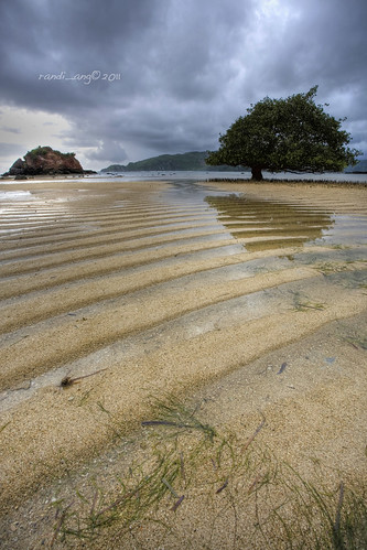 seascape seaweed west tree beach rain landscape sand pattern cloudy south tide low mangrove lombok nusa kuta seger barat tenggara