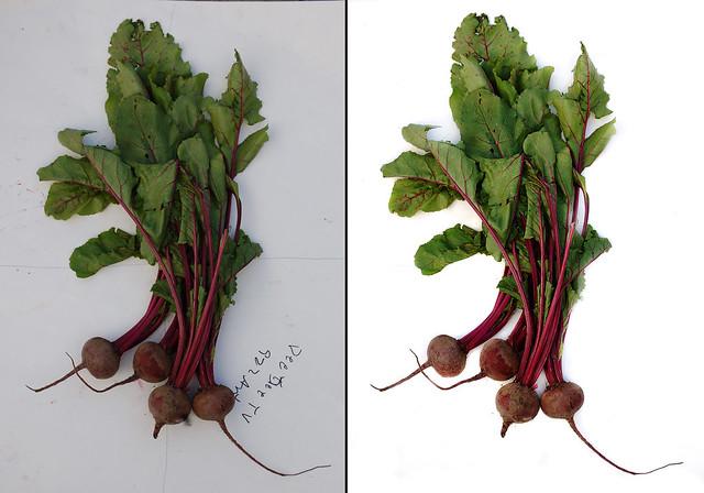 beets, photoshopped (2008)