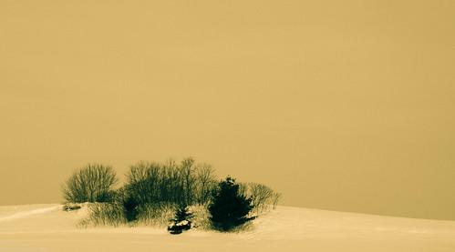 trees snow minnesota landscape 95