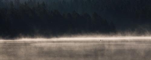 panorama misty fog sunrise switzerland duck twilight quiet silent swiss pano foggy ducks pines jura lonely etangdelagruère