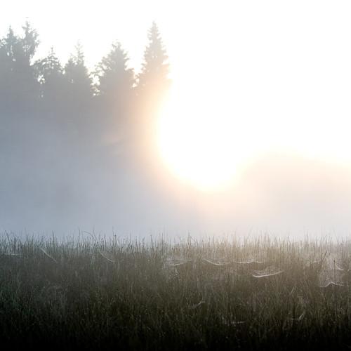misty fog sunrise switzerland spider twilight swiss spiderweb foggy pines jura etangdelagruère