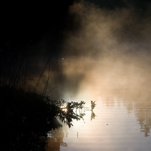 misty fog sunrise switzerland twilight warm swiss foggy pines jura etangdelagruère